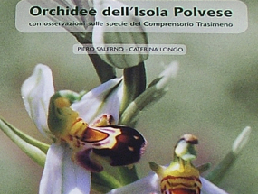 Orchidee dell'isola polvese